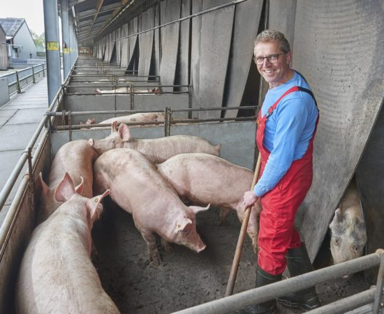 t.b.v. Vion- Goodfarmingstar website Reportage bij Frank Rietjens te Ell, Limburg. Fotograaf:Van Assendelft Fotografie